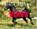 FLIRT D'OLMES Hongre